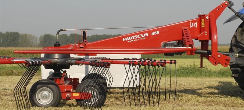 Hibiscus S/P